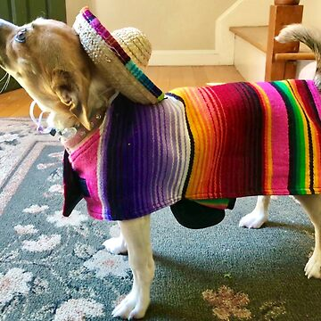 Chihuahua in Sombrero by Rocket-To-Pluto