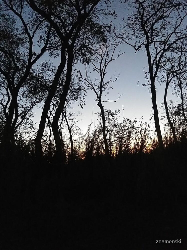 #tree #sunset #sky #trees #landscape #silhouette #winter #nature #sun #forest #sunrise #dusk #blue #morning #field #lake #fog #clouds #cloud #cold #night #evening #orange #mist #dark by znamenski