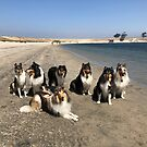 Collie Day at the Beach by Jan  Wall