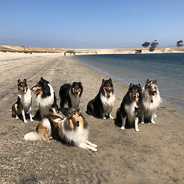 Collie Day at the Beach by jwphotos