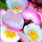 pink flower  by jayantilalparma