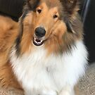 Beautiful Rough Collie  by Jan  Wall