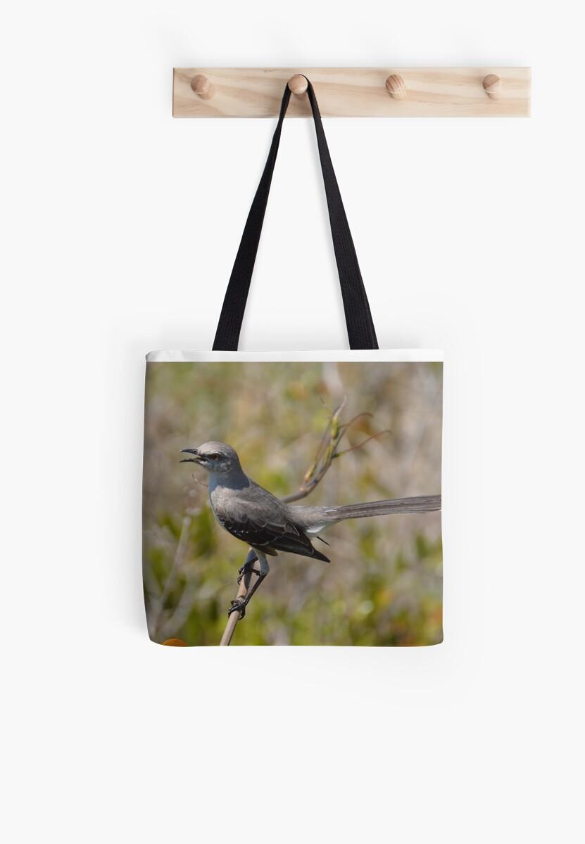 Bahama Mockingbird Call by LizardSpirit