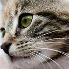 Kitten , 12 weeks old by Tenee Attoh