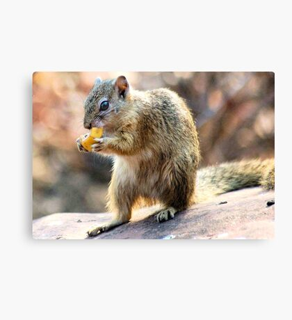 THE AUTUMN BANANA SQUIRREL Canvas Print
