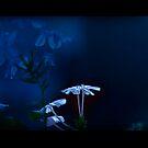 blue flowers by jayantilalparma