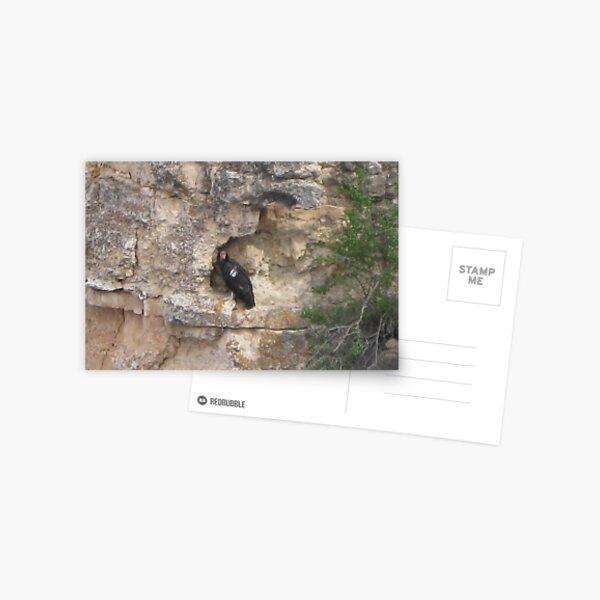 Grand Canyon Cliff Dweller Postcard