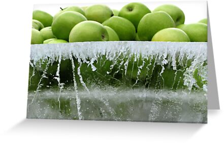 Frozen apples by Jade  French