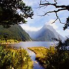 At Milford Sound by Barbara  Brown