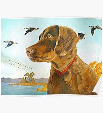Chesapeake Bay Retriever Puppy Poster