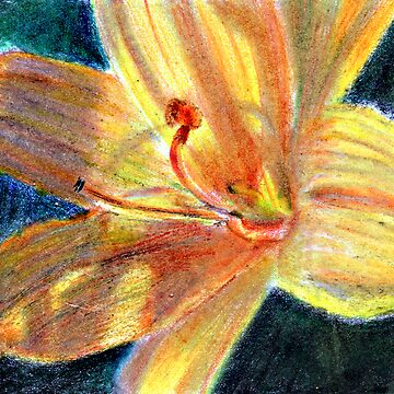 Lily Close Up by jimmie
