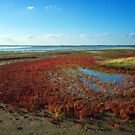 Colors on the Wetlands of Flakkee by Adri  Padmos