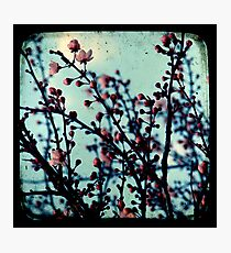 Spring Blossoms Through The Viewfinder - TTV Photographic Print