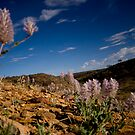 Desert Flowers One by Guilherme Pontes