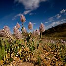 Desert Flowers Two by Guilherme Pontes