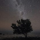 mangrove under the stars and milky way  by Elliot62