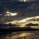 Byron Bay Sunset  by Jack Bridges