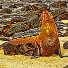 Sea Lions by Morris Klein