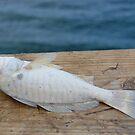 fish by angiebabie11290