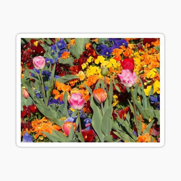 Colourful flowers at floriade Sticker