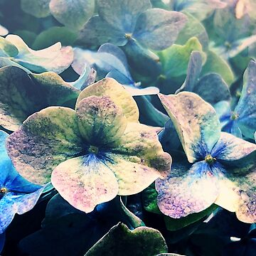 Blue Hydrangea Flower Botanical by oliviastclaire