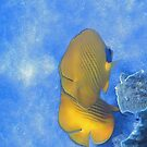 The Masked Butterflyfish Blue Theme by hurmerinta