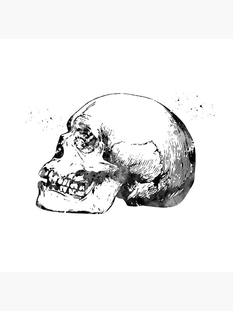Skull Anatomy by erzebetth