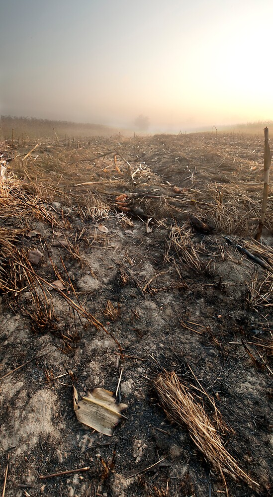 Scorched earth by beemar