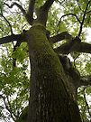 Tweed Tree by Ryan Davison Crisp