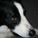 New Dog Friend by Deborah  Benoit