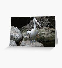 Pelican Pete Greeting Card