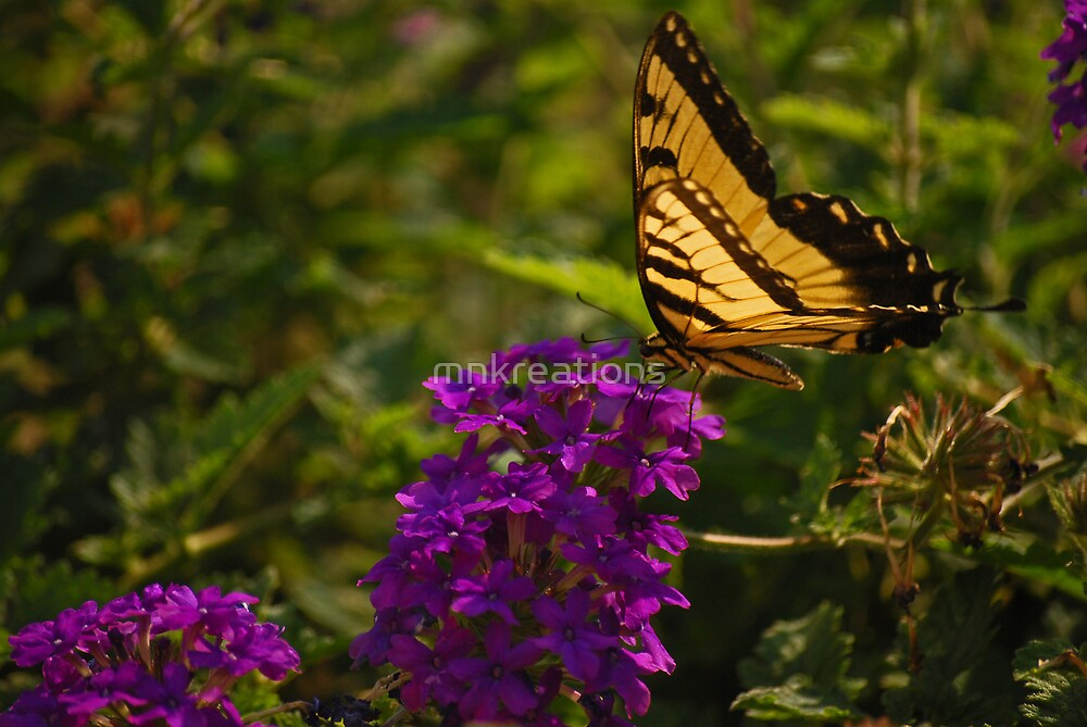 Tiger Swallowtail  by mnkreations