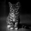 Kitten by Ben Luck