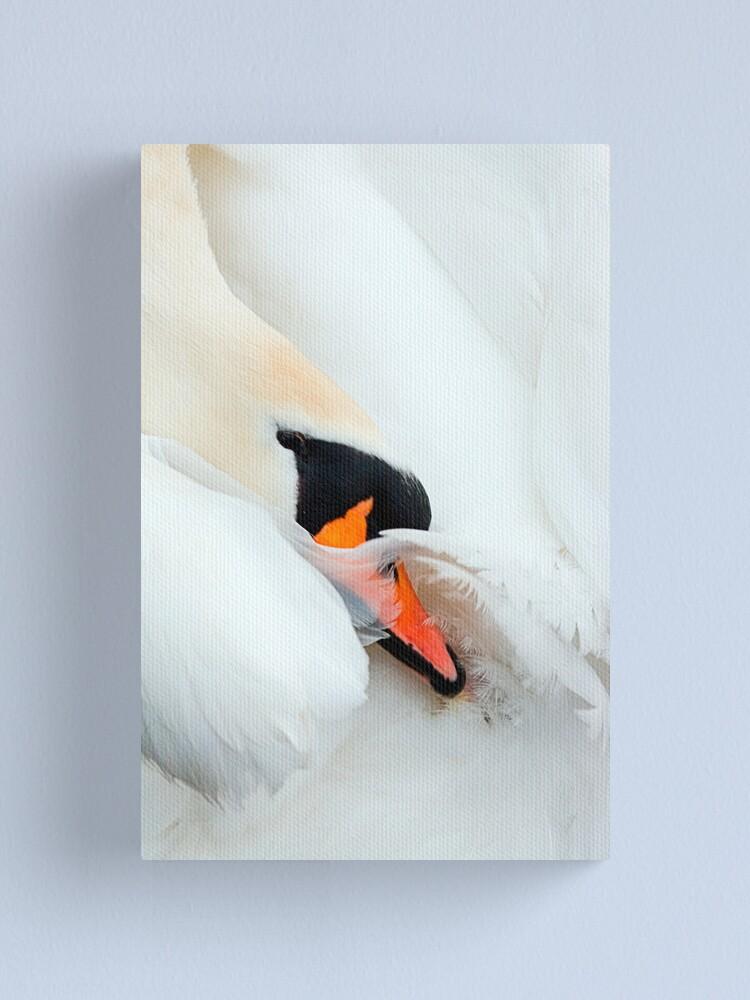 Alternate view of Preening Swan Canvas Print