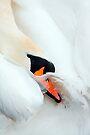 Preening Swan by Stuart Robertson Reynolds