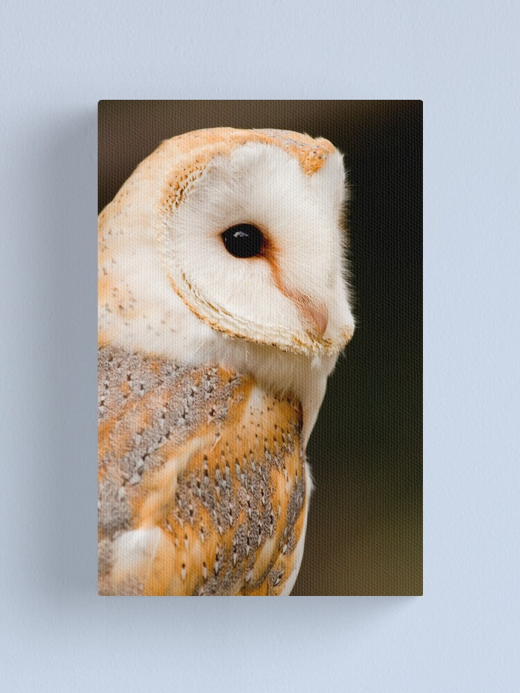 Alternate view of Barn Owl Canvas Print