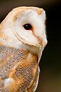 Barn Owl by Stuart Robertson Reynolds