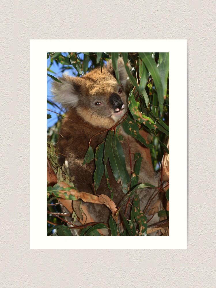 Alternate view of Koala Art Print