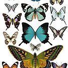 Vintage Schmetterlinge von hannahahkane