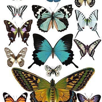 Mariposas vintage de hannahahkane
