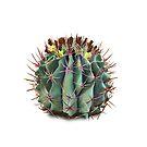 «Cactus» de hannahahkane