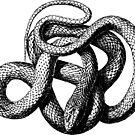 «SERPIENTE NEGRA Y BLANCA» de hannahahkane