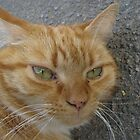 Ginger Tom by dawnpeace
