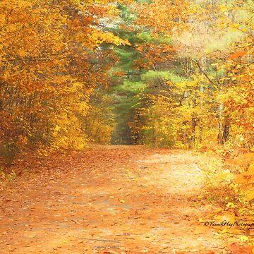 Autumn's Soft Colour Palette by Photograph2u