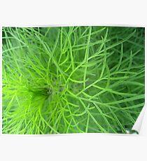 Soft Ferns Poster