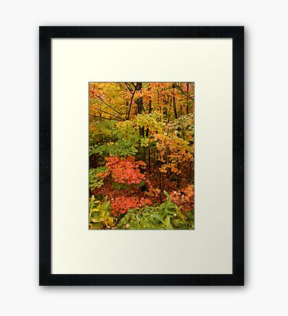 Maple Heaven Framed Print