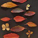 Wild Things - Autumn Leaves by Julie Sherlock
