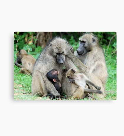 FAMILY TIME - THE CHACHMA BABOON - Papio ursinus Canvas Print