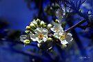 Essence of Spring by Vicki Pelham