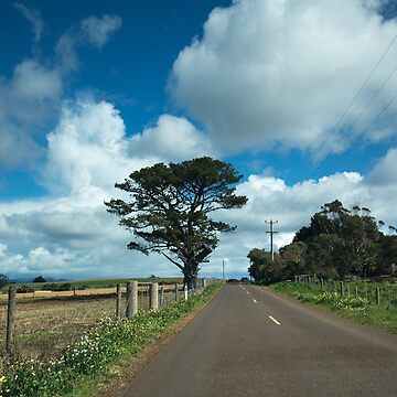 Springtime on a Tasmanian Country Road by colinsart